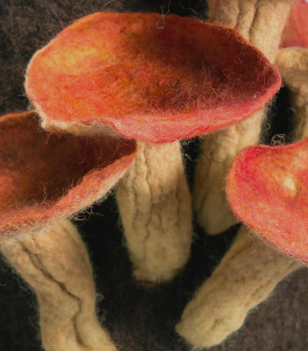 Felted fungus